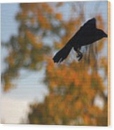 Crow In Flight 3 Wood Print