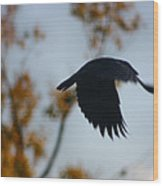 Crow In Flight 4 Wood Print