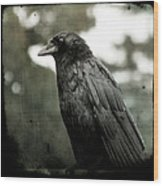 Crow In The Summer Rain Wood Print