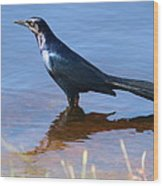 Crow In The Water Wood Print