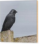 Crow Perched On A Fence Wood Print
