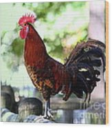 Crowing Red Junglefowl Rooster Wood Print