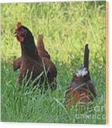 Crowing Rooster Wood Print