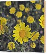 Crown Daisies Wood Print