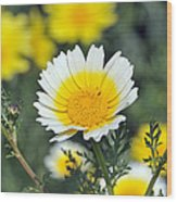 Crown Daisy Flower Wood Print by George Atsametakis