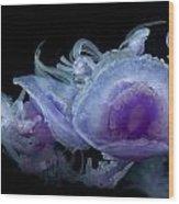 Crown Jellyfish Wood Print