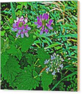 Crown Vetch And Catnip In Pipestone National Monument-minnesota Wood Print