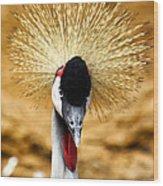 Crowned Crane - Balearica Regulorum Wood Print