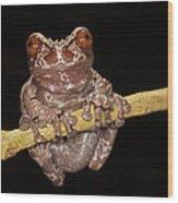 Crowned Frog Costa Rica Wood Print