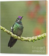 Crowned Hummingbird Wood Print