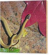 Crowned Snake Wood Print