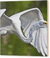 Cruising Egret Wood Print