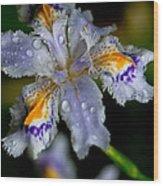 Crying Fringed Iris-iris Japonica Wood Print