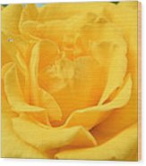 Crying Yellow Rose Wood Print