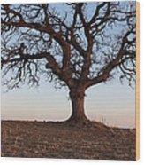 Cryptic Tree Wood Print