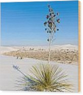 Crystal Dune Tree At White Sands National Monument In New Mexico. Wood Print