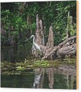 Crystal River Egret Wood Print by Skip Willits