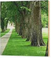 Csu Tree Path Wood Print
