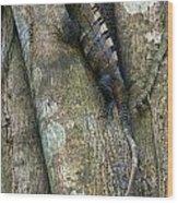 Ctenosaur 3 Wood Print