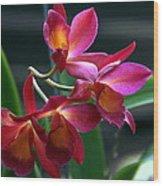 Ctna New River Orchid Wood Print