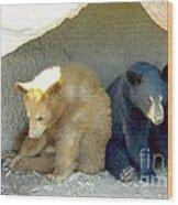 Cubs In A Pod Wood Print by Kim Petitt