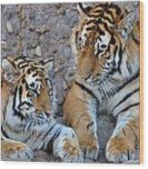 Cubs Wood Print