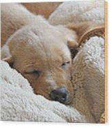 Cuddling Labrador Retriever Puppy Wood Print