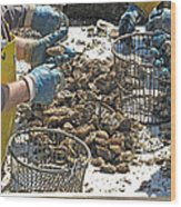 Culling Oysters Wood Print