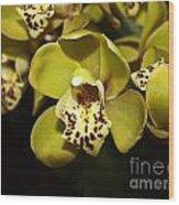 Cumbidium Orchid Wood Print