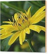 Cup Flower Wood Print