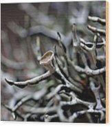 Cup Lichen Wood Print
