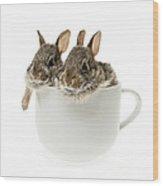 Cup Of Bunnies Wood Print by Elena Elisseeva