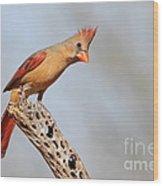 Curious Cardinal Wood Print