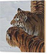 Curious Cats Wood Print