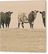 Curious Cows Wood Print