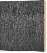 Curious Deer Wood Print