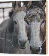 Curious Donkeys Wood Print