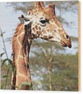 Curious Giraffe 2 Wood Print