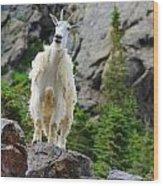 Curious Goat Wood Print
