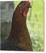 Curious Hen Wood Print