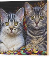 Curious Kitties Wood Print