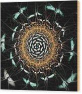 Curious Moth Wood Print