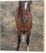 Curious Mustang Wood Print