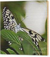 Curious Paper Kite Wood Print