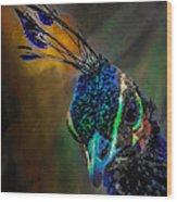 Curious Peacock  Wood Print
