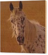 Curious Pony With Spots Wood Print