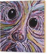 Curious Schnauzer Wood Print