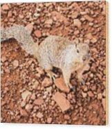 Curious Squirrel 2 Wood Print