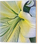 Curl Of A Lily Wood Print