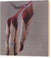 Curled Wood Print